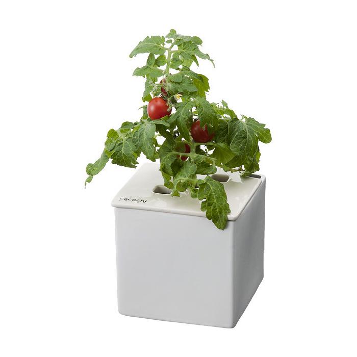 トマトを育てた時の様子