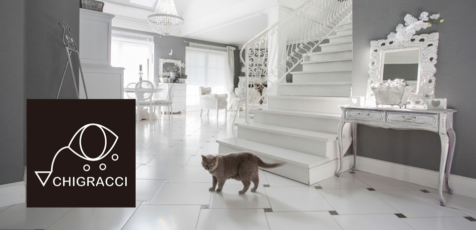 Horizontal view of cat in luxury interior