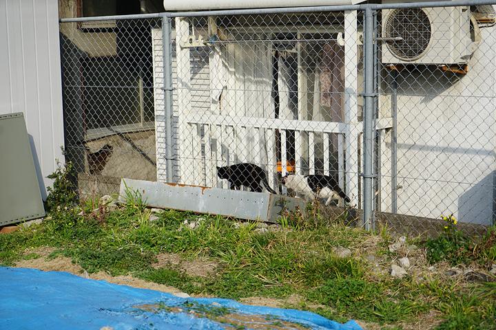 猫用の近道を通る猫たち。