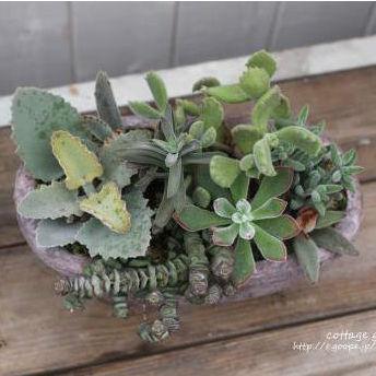 おきにいりの観葉植物や多肉植物がみつかる6つの通販サイト