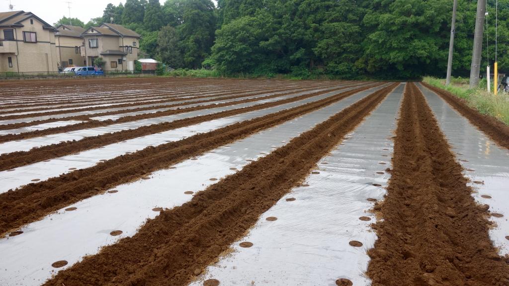 ここが種まきするピーナッツ畑。
